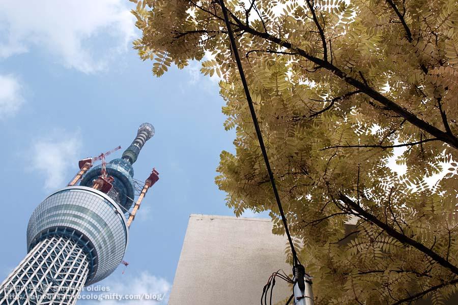 P4290021_murakashi_sekkai