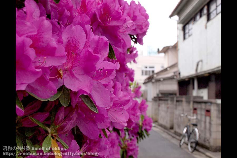 P5050172_satsuki_apartment