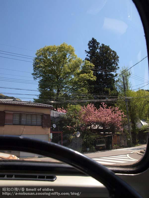P5150298_hikagenangou