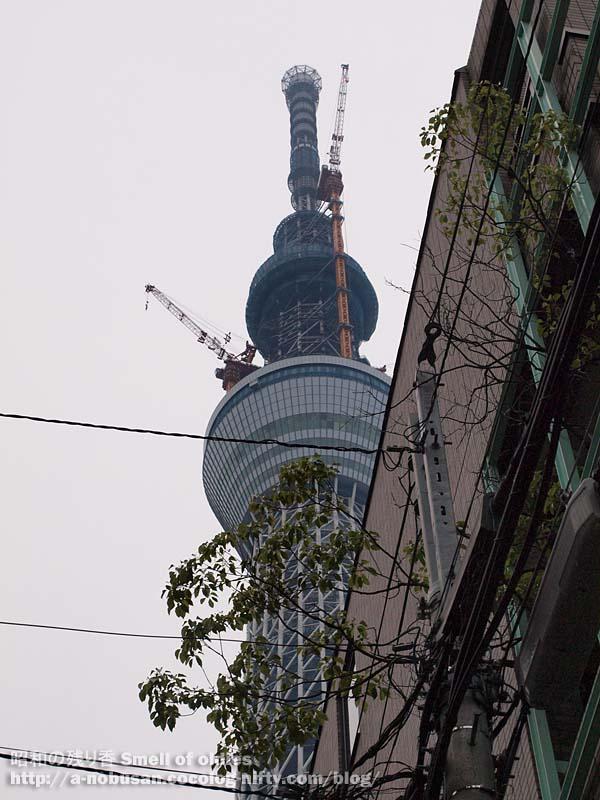 P5170650_shitamachi_sky_tree