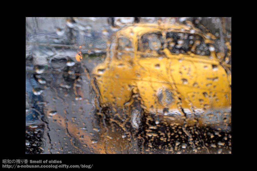 P5290363_rainey_yellow_beetle