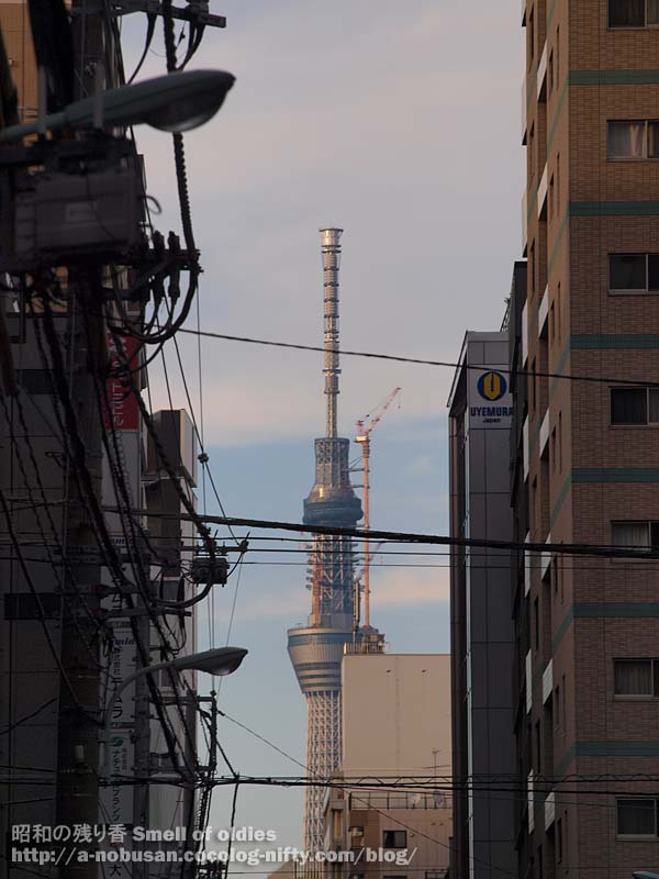 P6080402_senset_metaric_skytree
