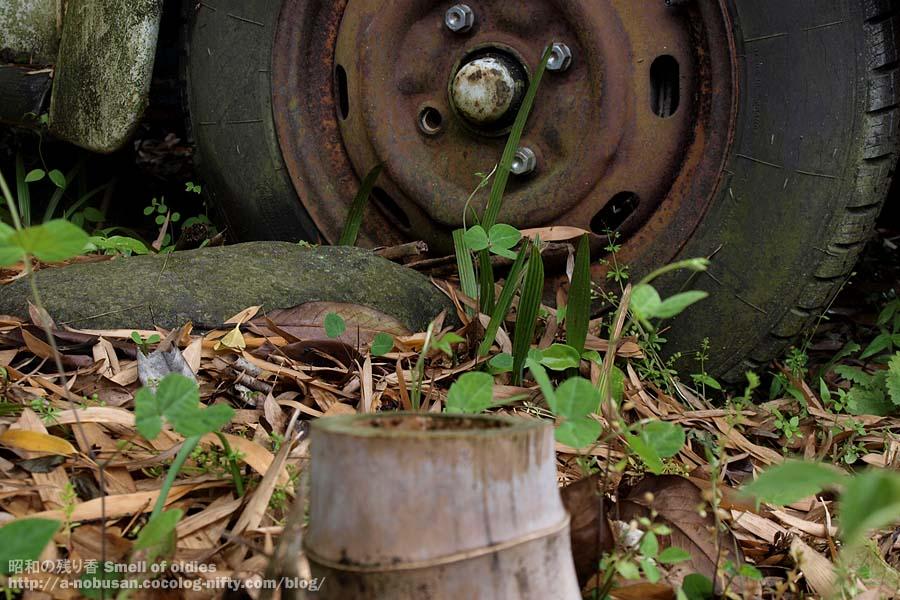 P6110125_forest_vw_wheel