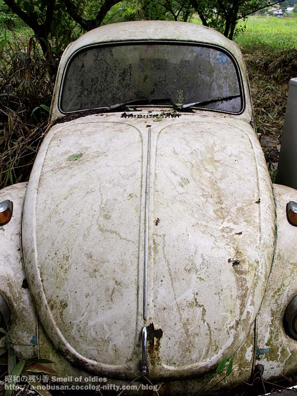 P6110195_forest_vw1302