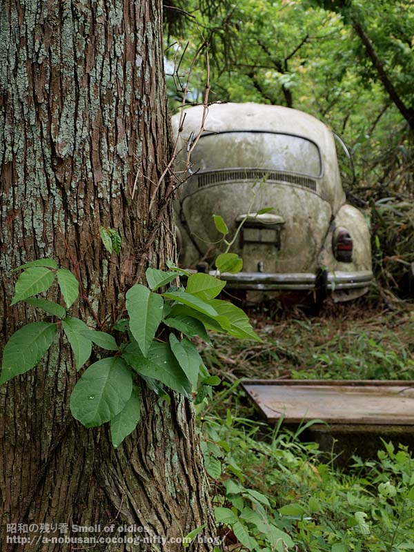 P6110215_forest_vw_beetle