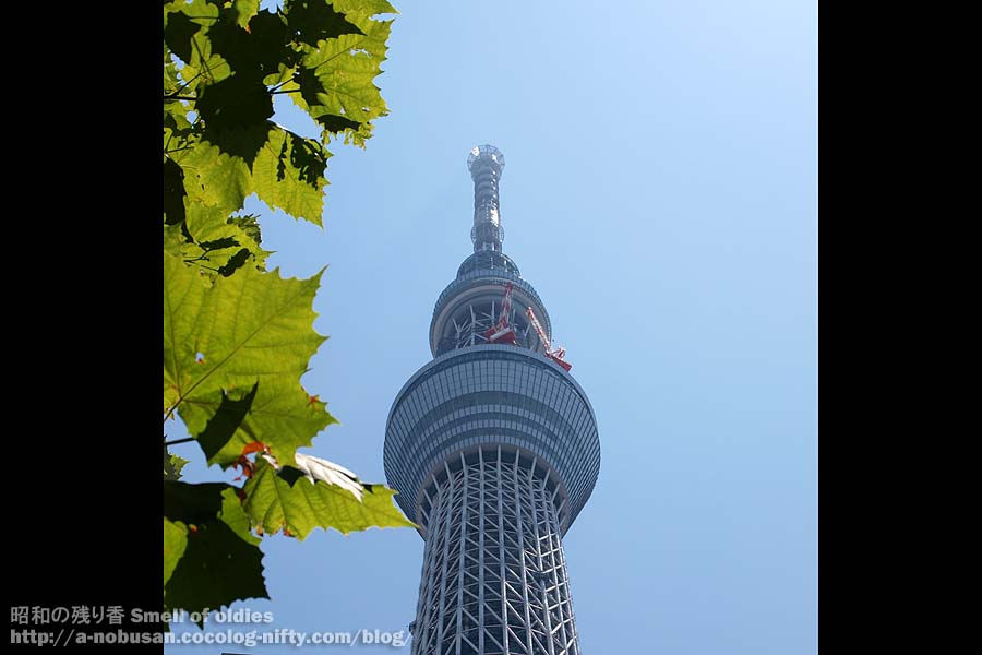 P7160585_leaf_and_tokyo_skytree
