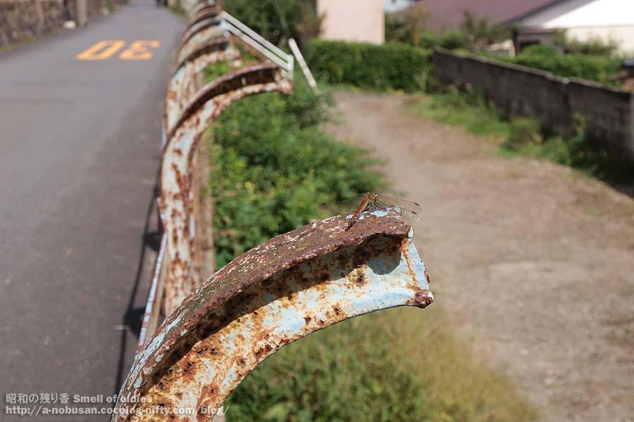 P9250511_tonbo_ashio