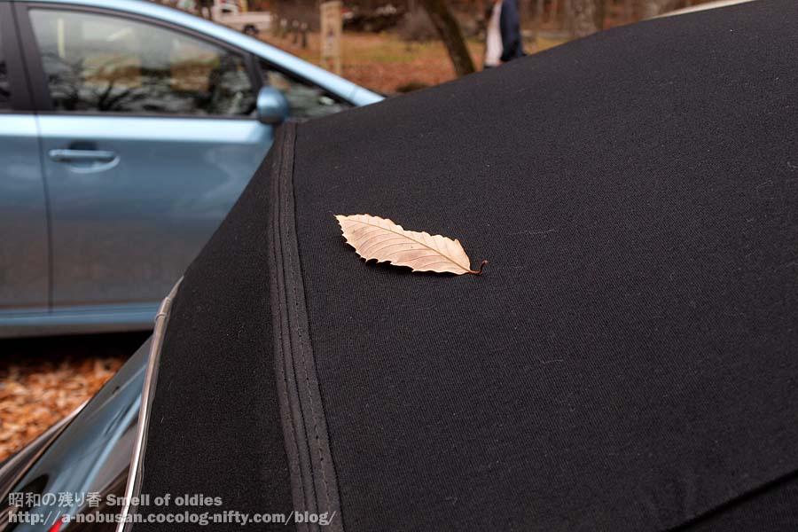 Pa240376_autumn_leaf