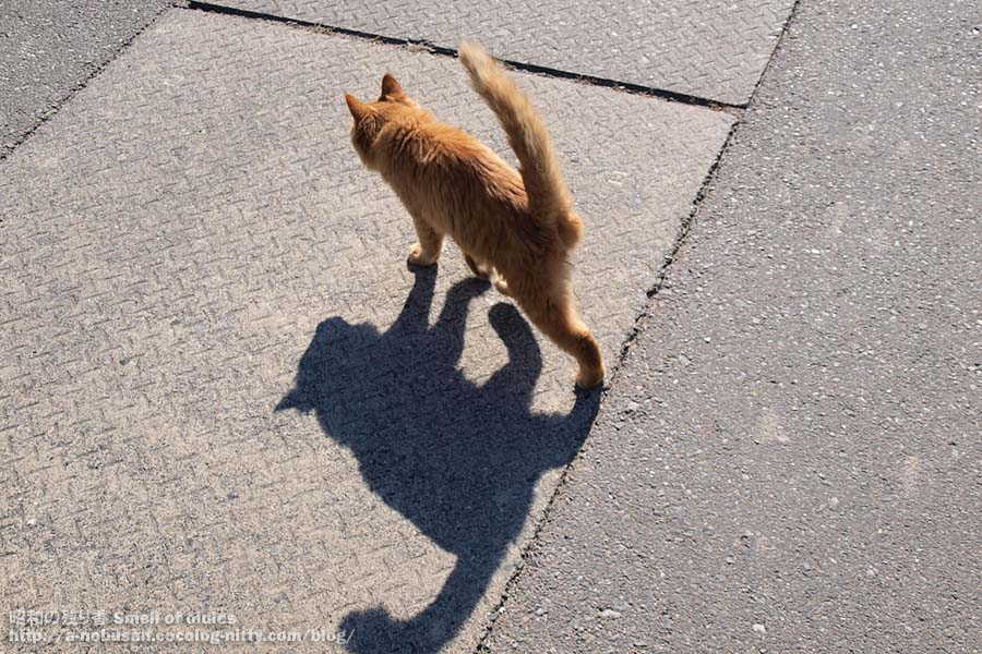 Pa290417_cat_silhouette