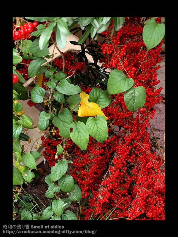 Pb050284_red_dress
