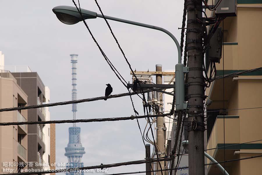 Pb080252_tokyo_crow_and_skytree