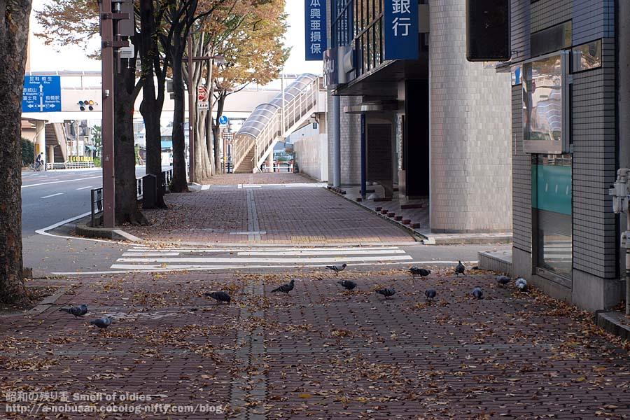 Pb120099_maebashi_hato