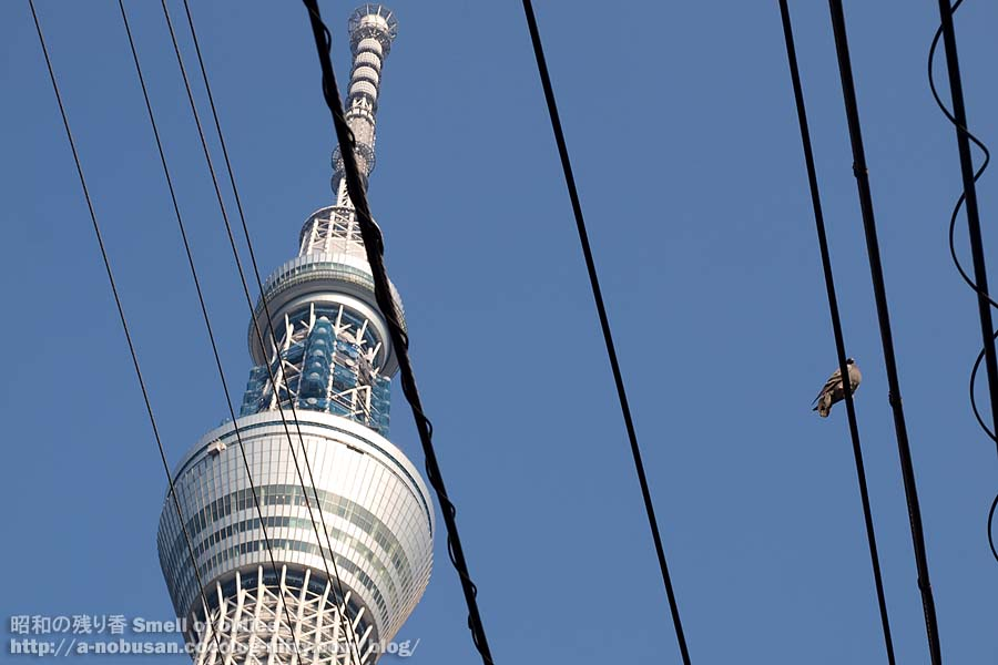 Pb230055_skytree_and_hato
