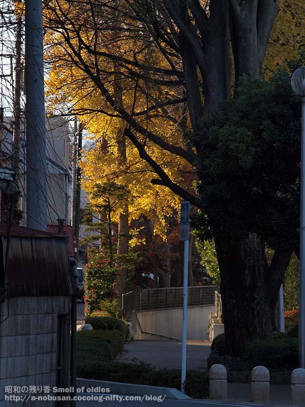 Pc110275_hirosegawa_gingko