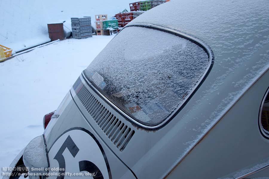 Pc260299_snowy_my_bug