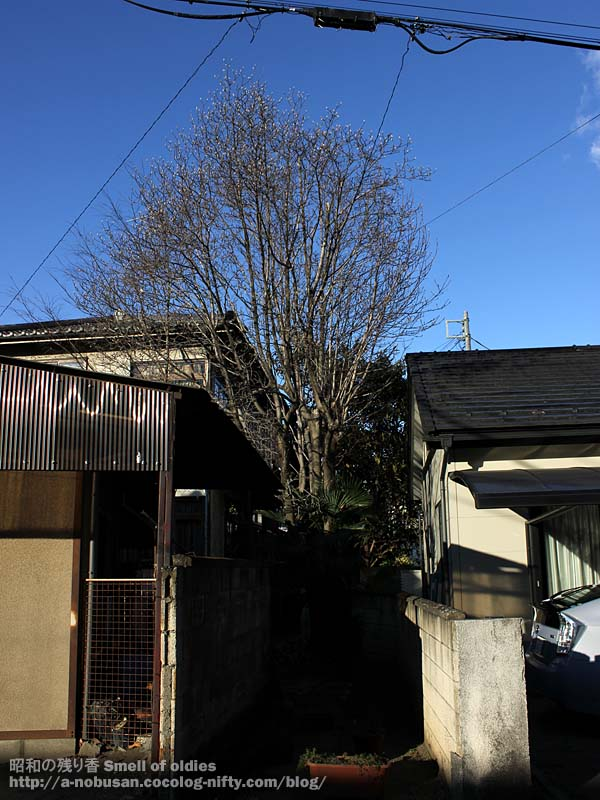 Img_0054_fuyu_no_ki