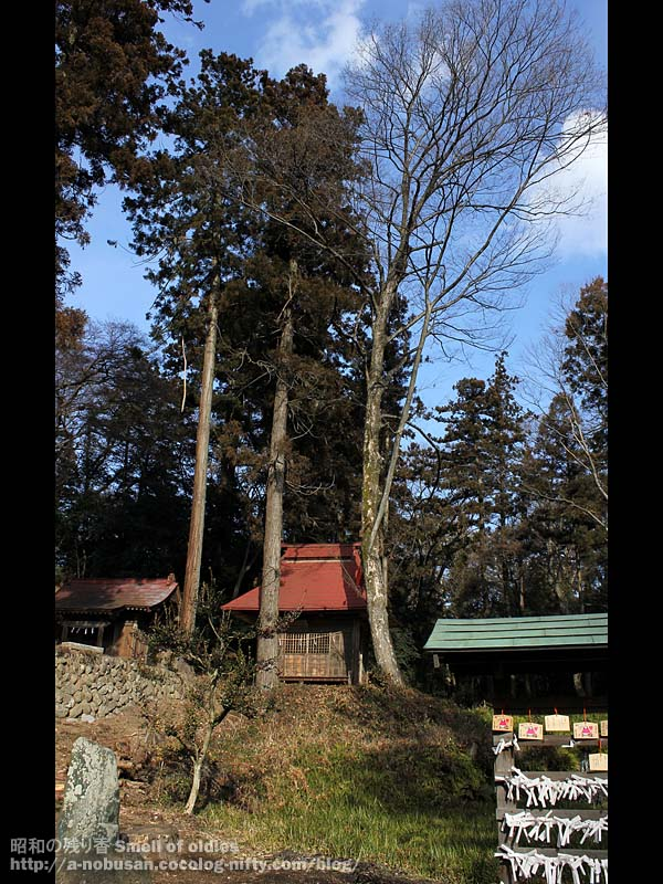 Img_8111_red_roof_and_tall_tree