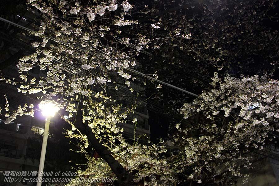 Img_2130_hachimansama_sakura