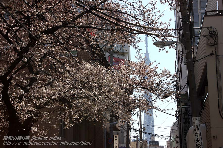 Img_2195_sakura_and_sky_tree