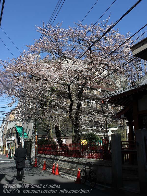 Img_2207_nishiasakusa_sakura