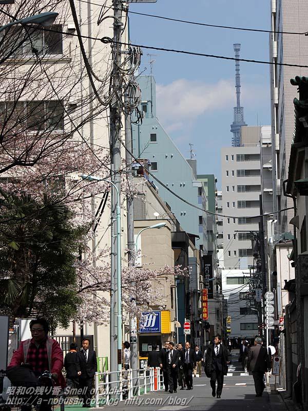 Img_2339_jishi_parksakura