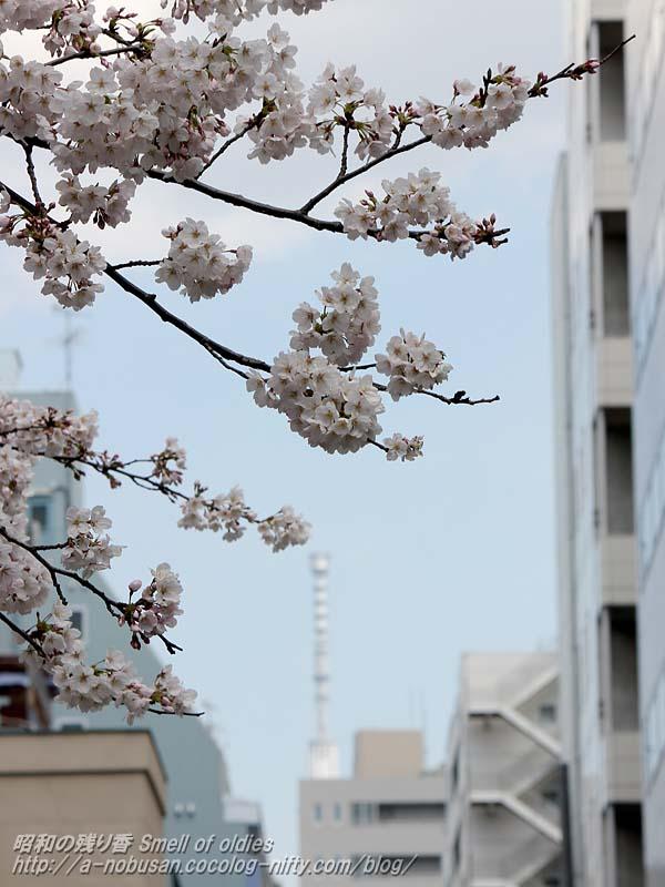 Img_2370_jishikoen_sakura