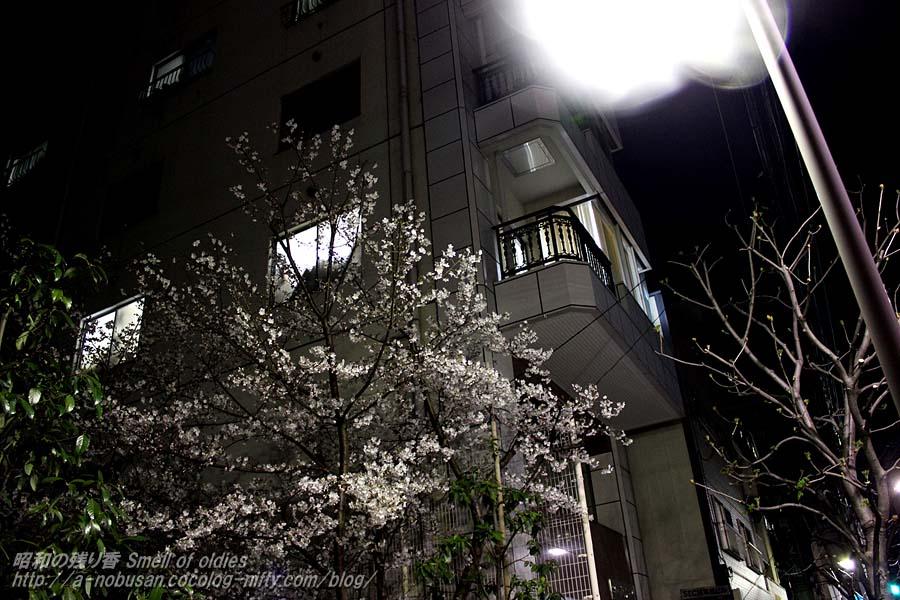 Img_2473_torigoe_sakura