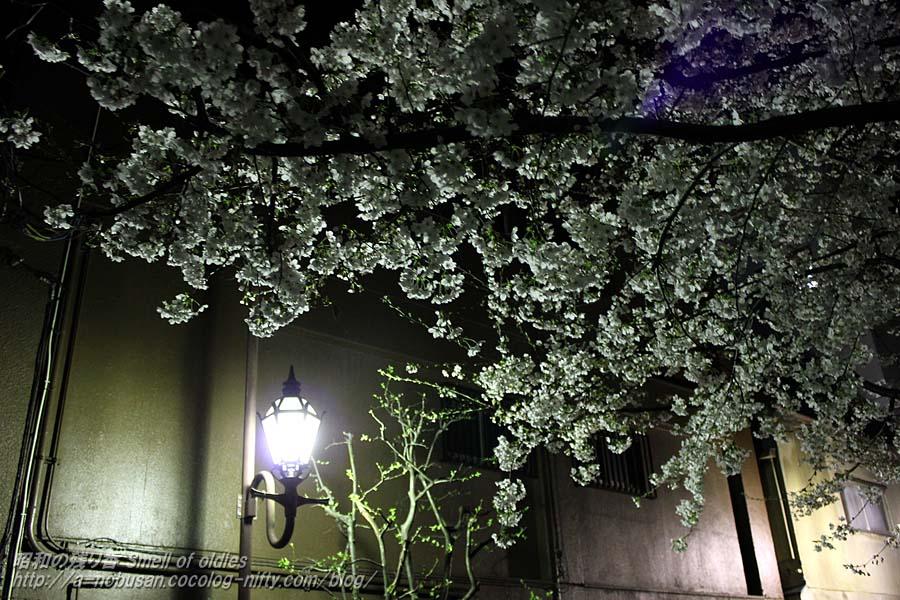 Img_2532_misuji_sakura
