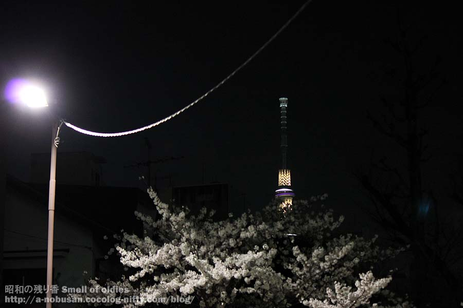 Img_4311_sakura_and_sky_tree