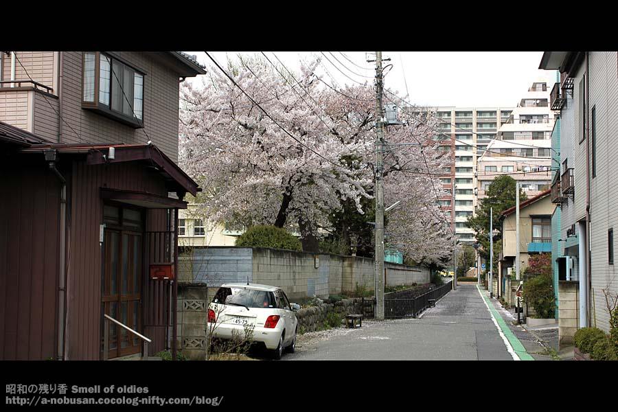 Img_6251_momonoisho_sakura