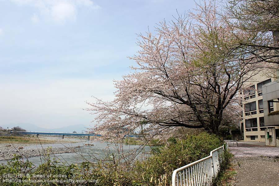 Img_6412_tonegawa_sakura