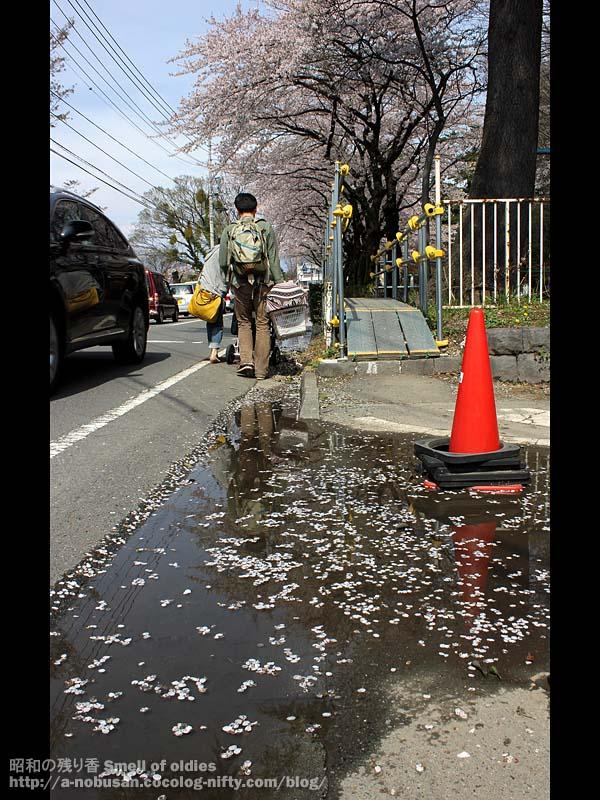 Img_6443_kenchoura_sakura