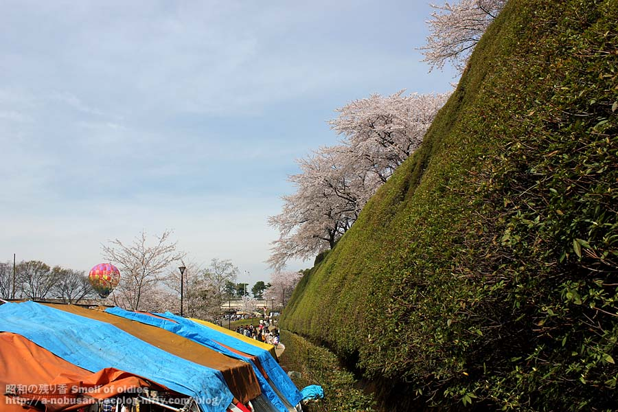 Img_6501_maebashi_park_sakura