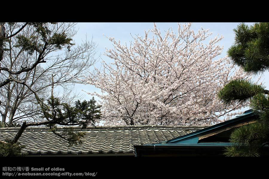 Img_6557_kawara_sakura