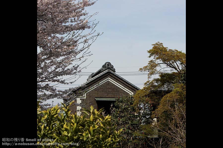 Img_6563_kura_sakura