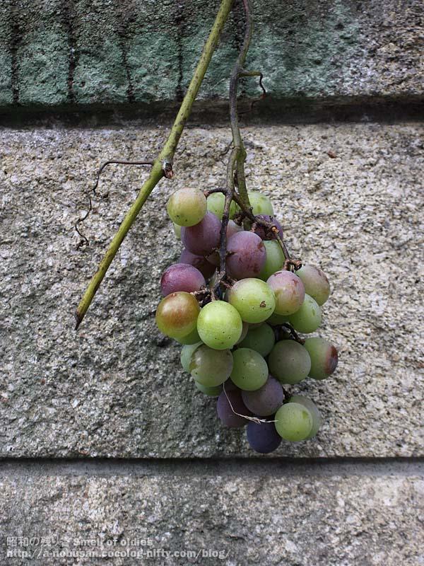 Img_0116_cute_grape