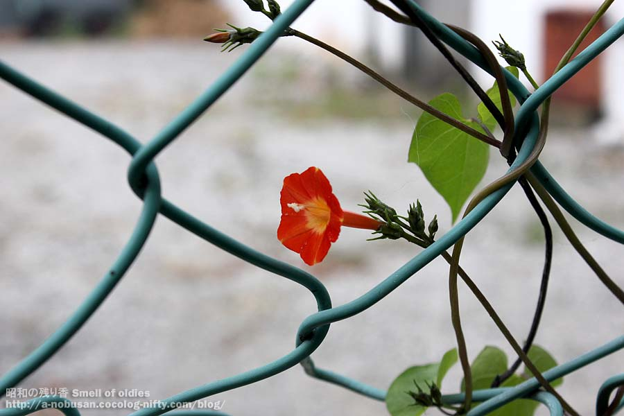 Img_0234_red_small_flower