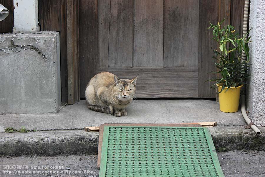 Img_0107_maebashi_cat