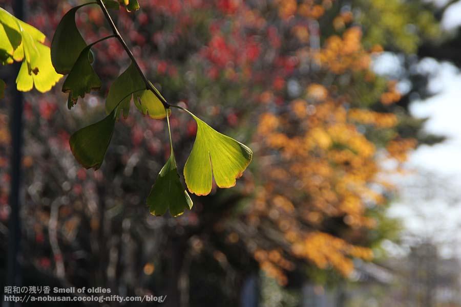 Img_0046_maebachi_icho