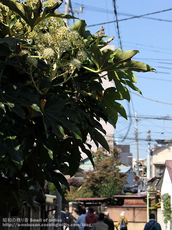 Img_0127_maebashi_yatsude