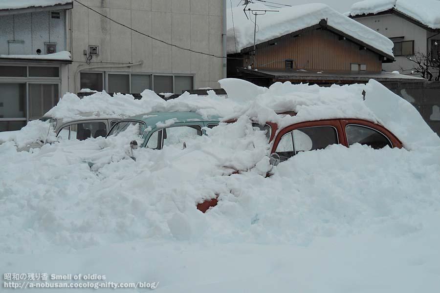 Dscn5465_snow_bugs