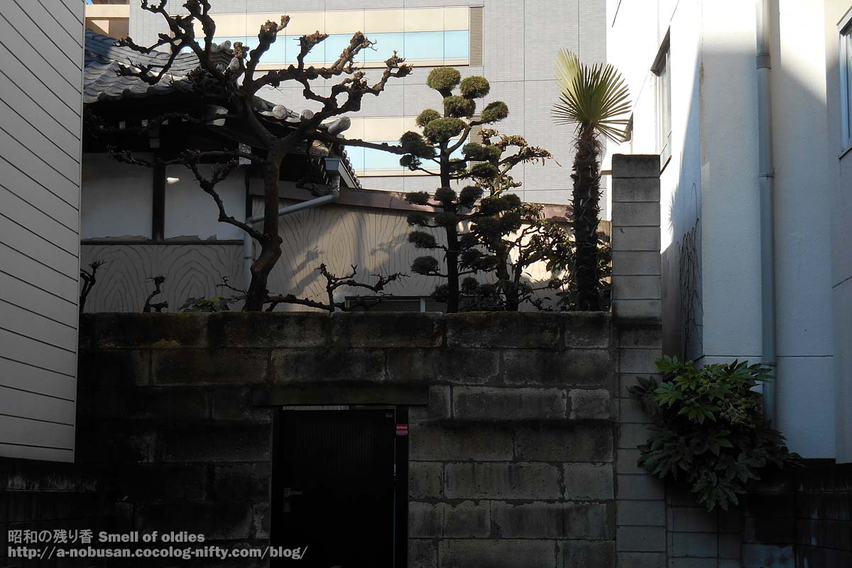 Dscn9242_niwa_no_ueki