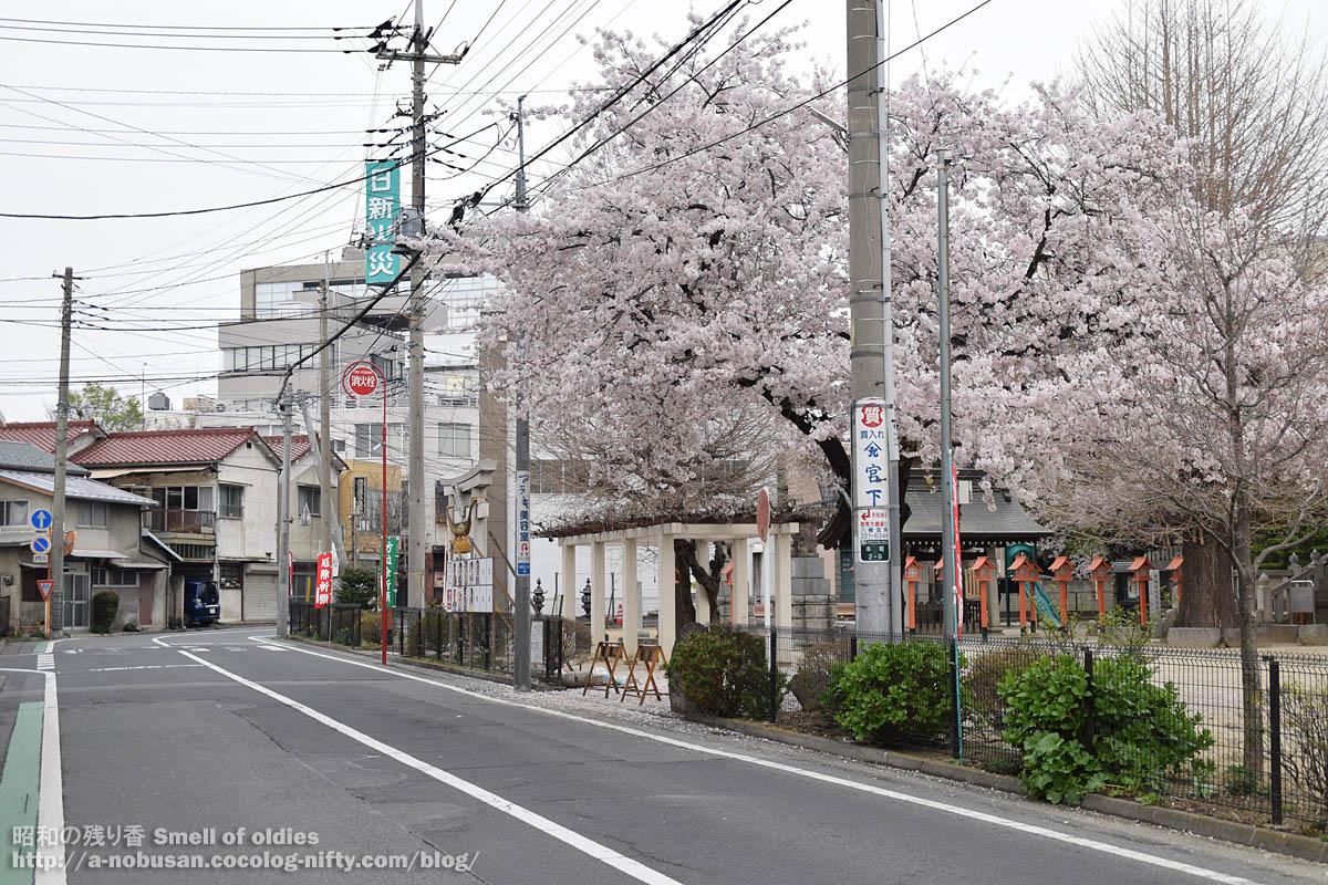 Dsc_0027_maebashi_hachiman_sakura