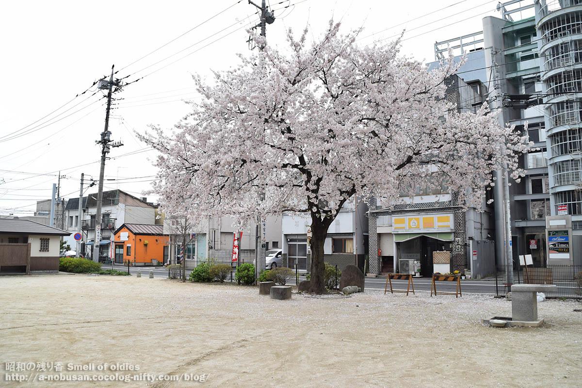 Dsc_0079_maebashi_hachimangu_sakura