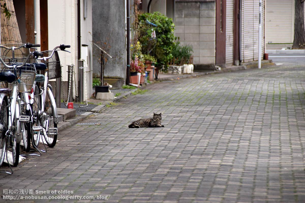 Dsc_0240_cat_neko_maebashi