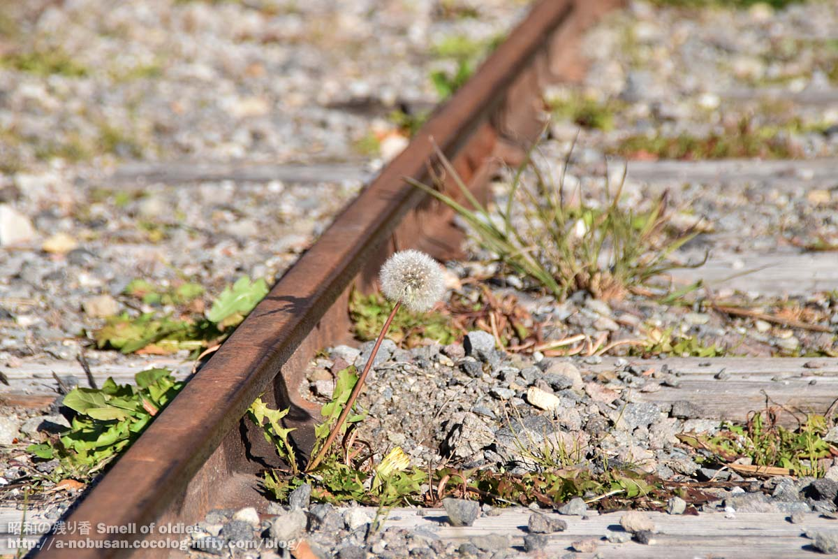 Dsc_0649_railroad_tanpopo_watage