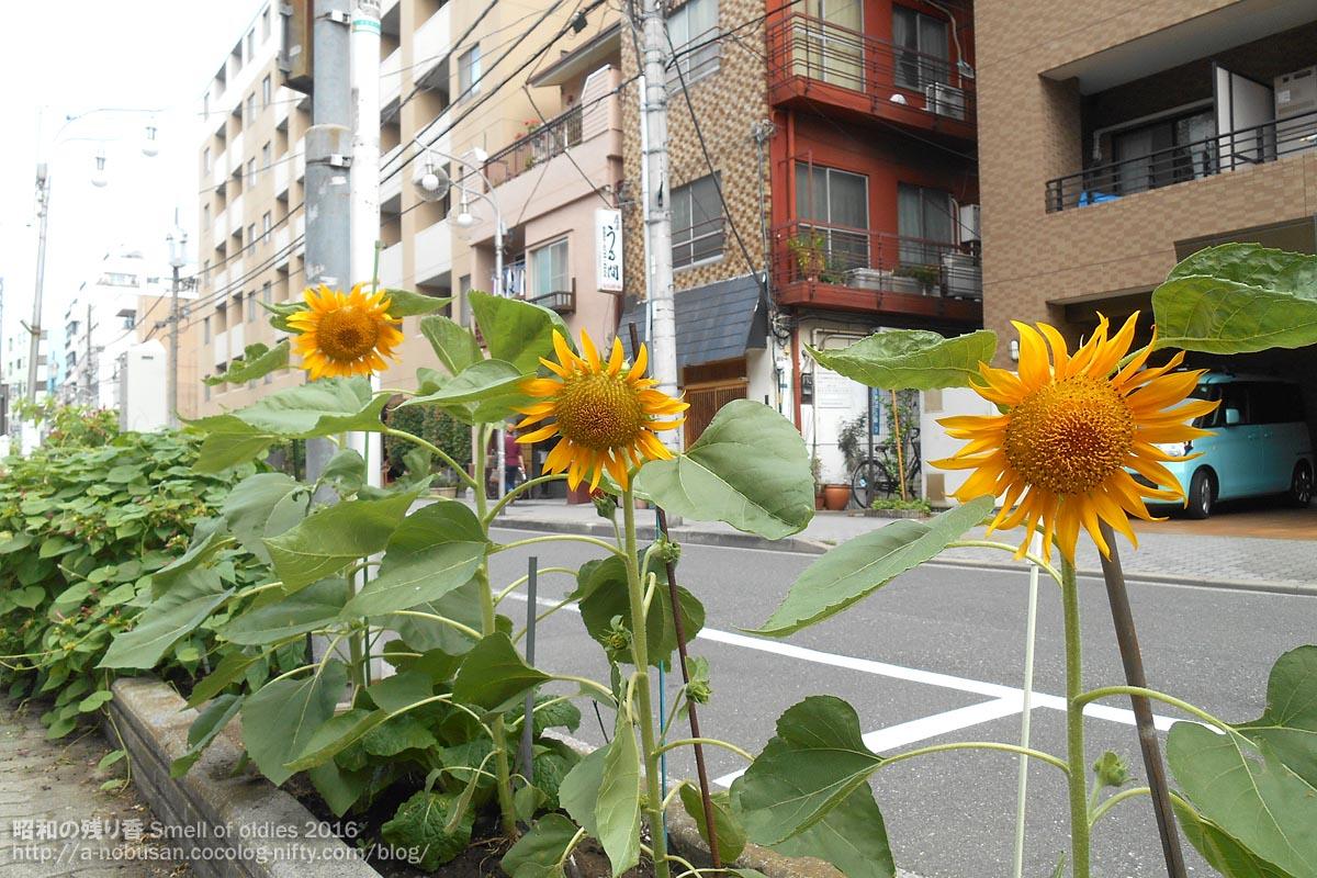 Dscn8951_himawari_asakusa