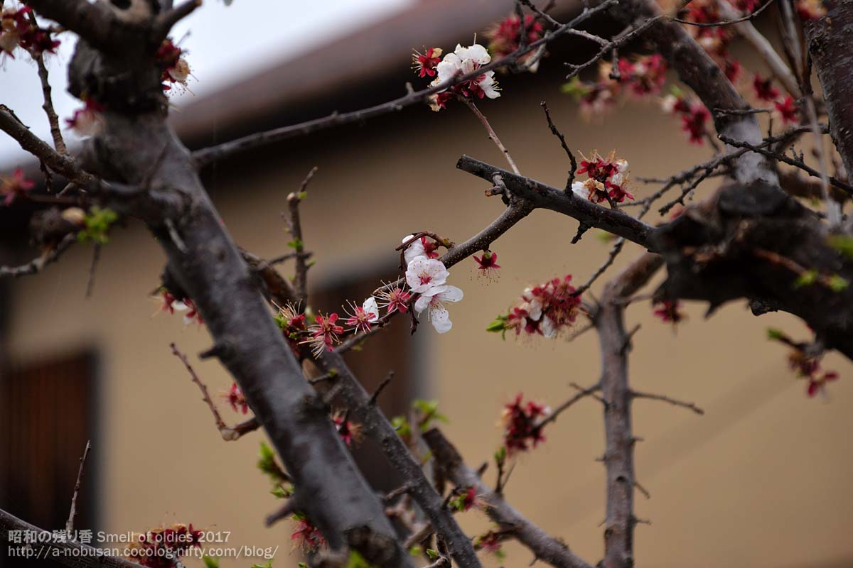 Dsc_0033_end_of_ume