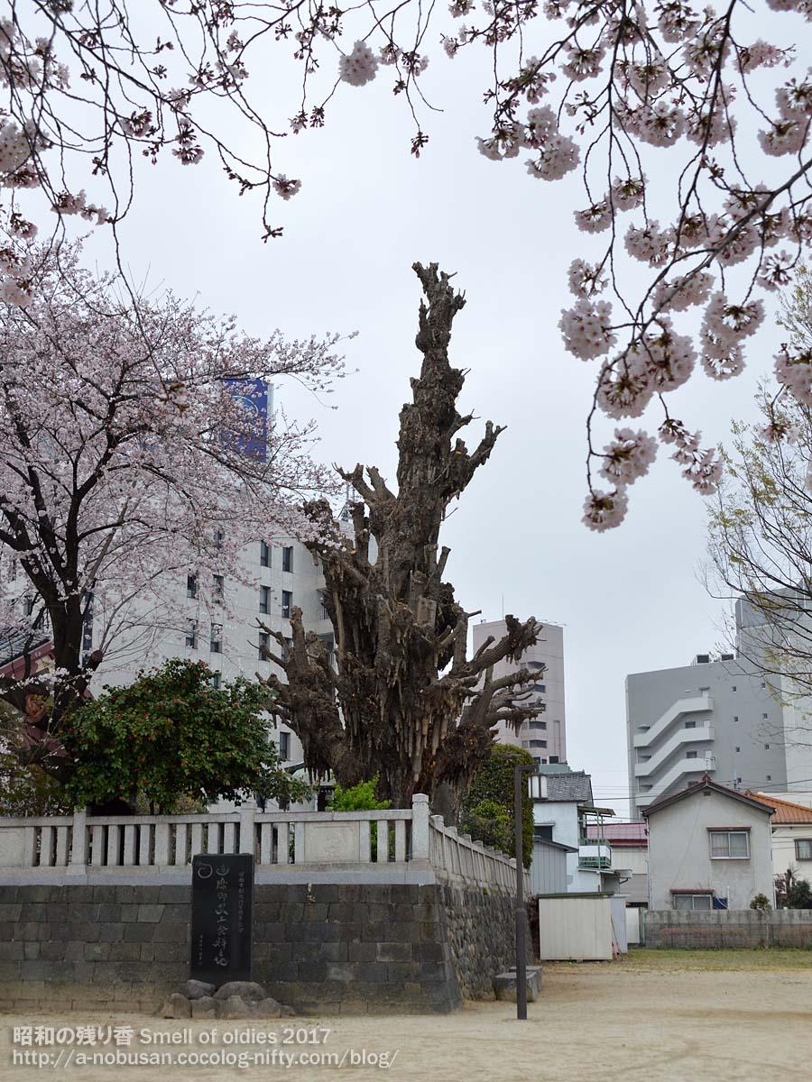 Dsc_0065_icho_to_sakura