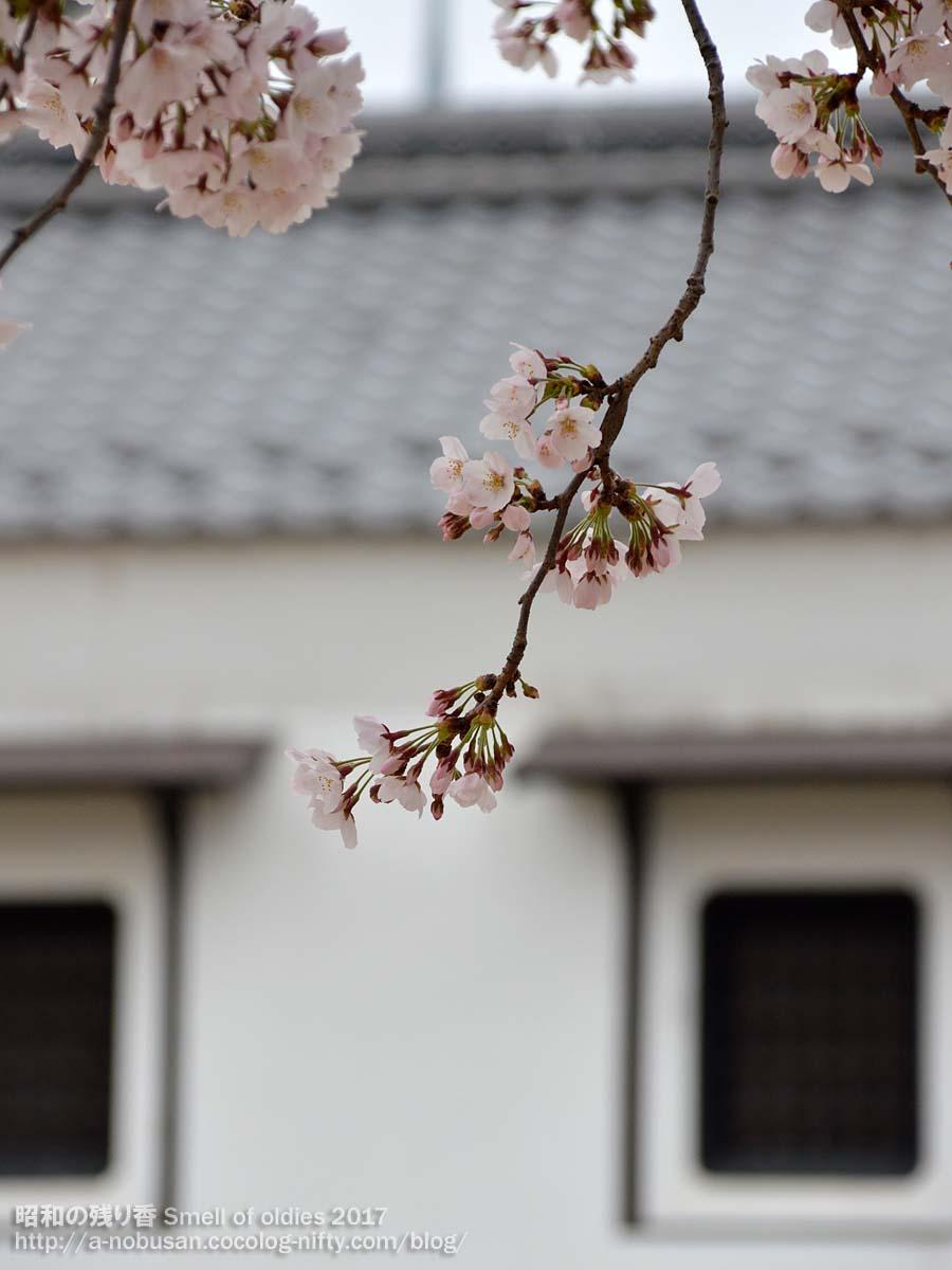 Dsc_0072_sakura_to_kura